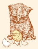 Cubs. Vector drawing of the kitten and chicken Royalty Free Stock Photography