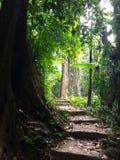Cuc Phuong国家公园 库存照片