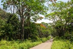 Cuc Phuong National Park Arkivbilder
