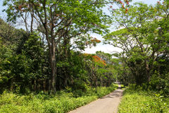 Cuc Phuong National Park Stock Images