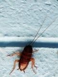 cucaracha Imagenes de archivo