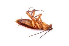 Cucaracha Foto de archivo