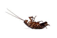 cucaracha Fotos de archivo
