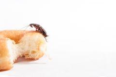 Cucaracha en el buñuelo en el fondo blanco Fotos de archivo
