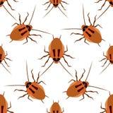 Cucaracha inconsútil del modelo en un fondo blanco Fotografía de archivo libre de regalías