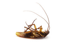 Cucaracha muerta Fotografía de archivo