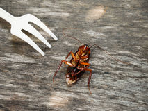 Cucaracha muerta Fotos de archivo