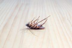 Cucaracha muerta en el piso de madera para el uso como concepto de control de parásito Fotografía de archivo libre de regalías