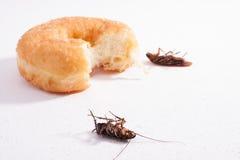 Cucaracha muerta y comida horizontales Imágenes de archivo libres de regalías