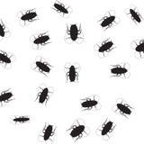 cucarachas Imágenes de archivo libres de regalías