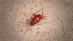 Cucarachas muertas en piso del cemento almacen de video