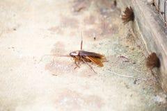 Cucarachas y hormigas fotos de archivo libres de regalías