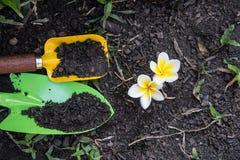 Cucchiai della pala che scavano suolo e la plumeria Fotografie Stock Libere da Diritti