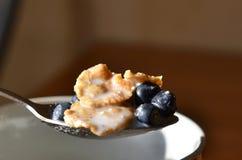 Cucchiaio con cereale ed il mirtillo Immagini Stock Libere da Diritti