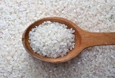 Cucchiaio del riso Fotografia Stock
