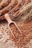 Cucchiaio di legno con i granuli del frumento Immagine Stock Libera da Diritti