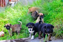Cuccioli Fotografia Stock Libera da Diritti