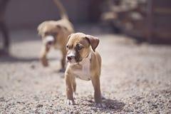 Cuccioli che esaminano macchina fotografica Immagini Stock