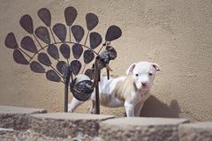 Cuccioli che esaminano macchina fotografica Fotografia Stock