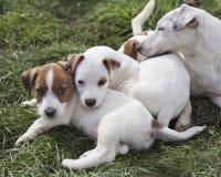 Cuccioli con mam Fotografia Stock