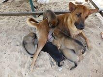 Cuccioli d'alimentazione del cane sveglio immagini stock libere da diritti