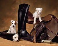3 cuccioli del terrier di russell della presa Immagine Stock Libera da Diritti