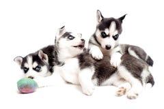 Cuccioli di cane allegri Fotografia Stock Libera da Diritti