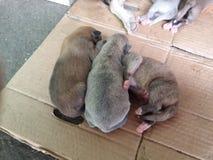 Cuccioli di sonno immagine stock