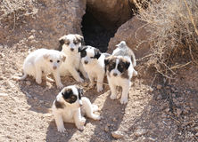 Cuccioli esterni fotografie stock