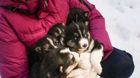 Cuccioli favoriti fotografie stock