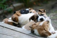 Cuccioli nel parco, animali nei cuccioli del naturecute nel parco, animali in natura fotografia stock libera da diritti
