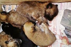 Cuccioli in una casella Fotografia Stock Libera da Diritti