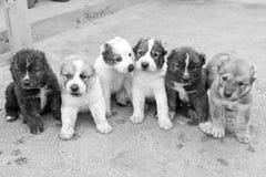 Cucciolo Immagini Stock