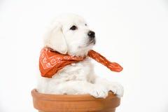 Cucciolo Immagini Stock Libere da Diritti
