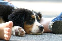 Cucciolo fotografie stock