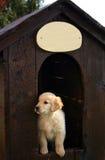 Cucciolo Fotografie Stock Libere da Diritti