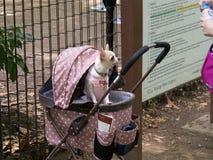 Cucciolo adorabile agghindato per un giorno di vacanza 2 Fotografia Stock Libera da Diritti