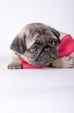 Cucciolo adorabile che considera il lato immagine stock