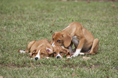 Cucciolo adorabile che dorme nell'erba verde immagine stock libera da diritti