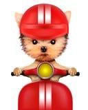 Cucciolo adorabile che si siede su una motocicletta Fotografie Stock Libere da Diritti