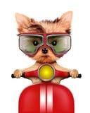 Cucciolo adorabile che si siede su una motocicletta Fotografia Stock