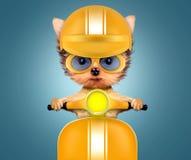 Cucciolo adorabile che si siede su una motocicletta Fotografie Stock
