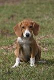Cucciolo adorabile che sta nell'erba verde fotografia stock libera da diritti