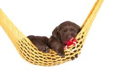 Cucciolo adorabile con una tettarella Fotografie Stock Libere da Diritti