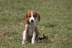 Cucciolo adorabile e piccolo che si siede nell'erba verde fertile fotografia stock libera da diritti