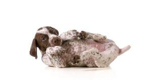 Cucciolo allegro Fotografia Stock Libera da Diritti