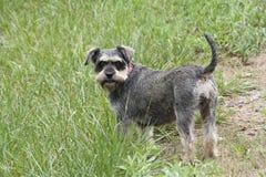 Cucciolo allegro che sta nell'erba verde alta e fertile fotografie stock