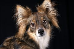 cucciolo attento Fotografie Stock Libere da Diritti