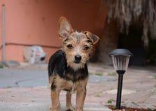 Cucciolo, bello cane Immagine Stock