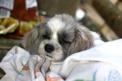 Cucciolo bianco di sonno Fotografia Stock Libera da Diritti